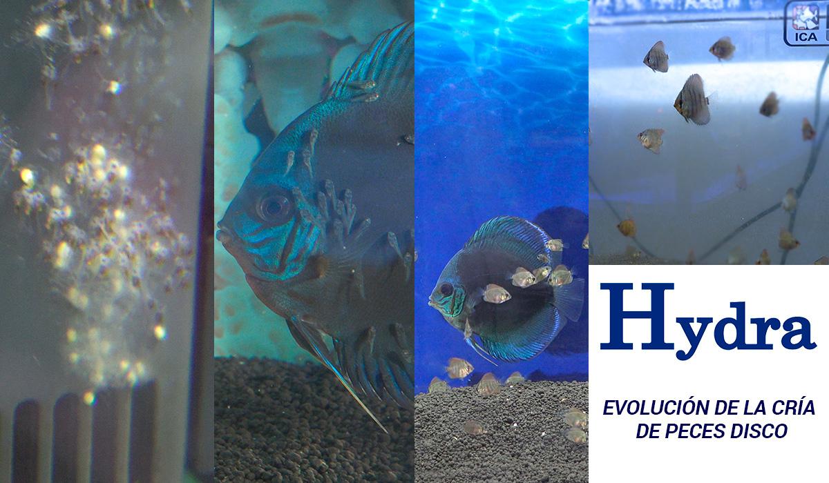 Filtro hydra la mayor revoluci n tecnol gica for Como hacer un criadero de peces